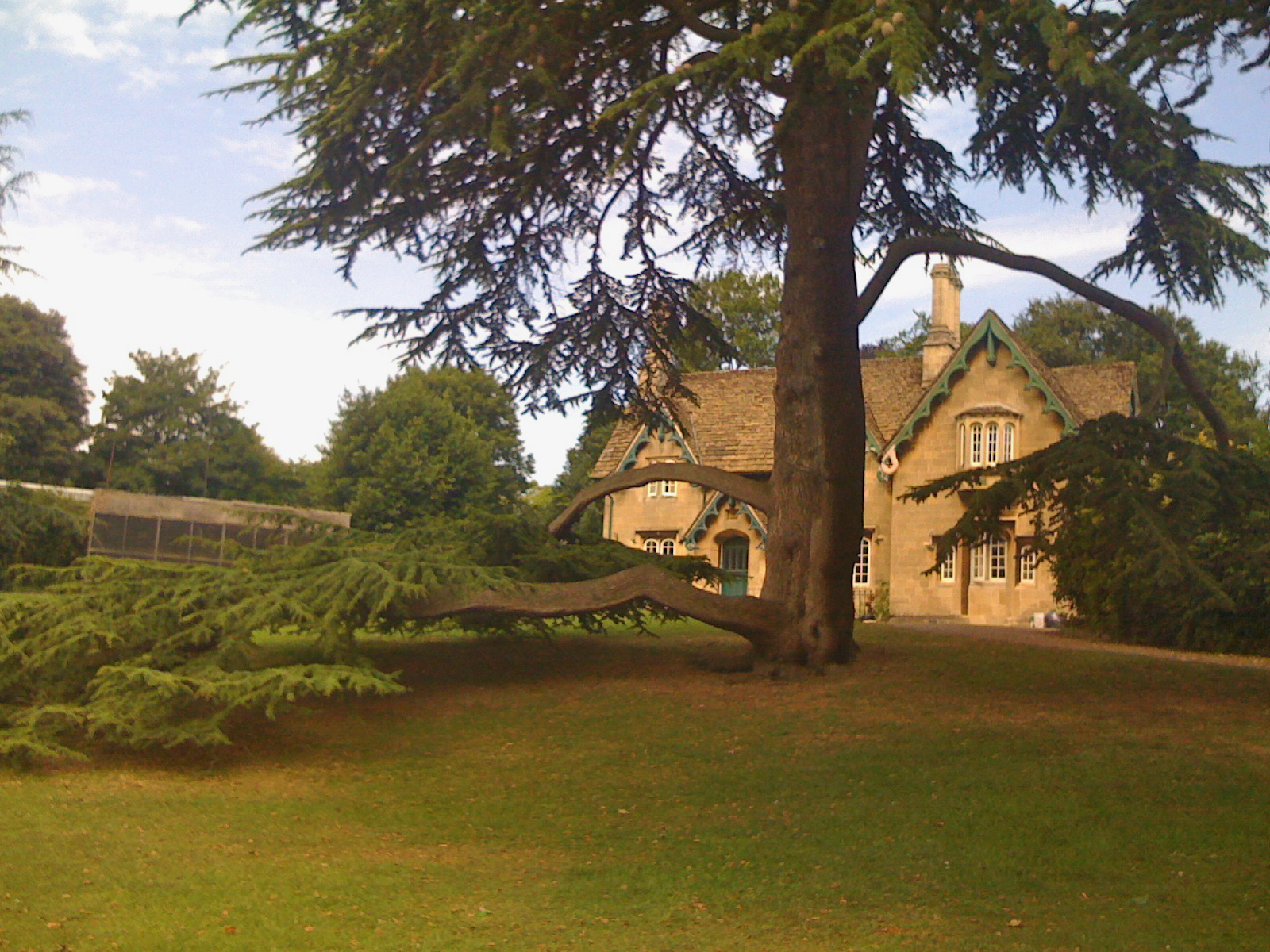 A fir type tree with a metre and a half diameter trunk featuring a large half metre diameter low growing branch extending several metres just a half metre from the ground, in the grounds of a century old, light stone, six bedroomed house with steep rooves edged with ornate green fascias